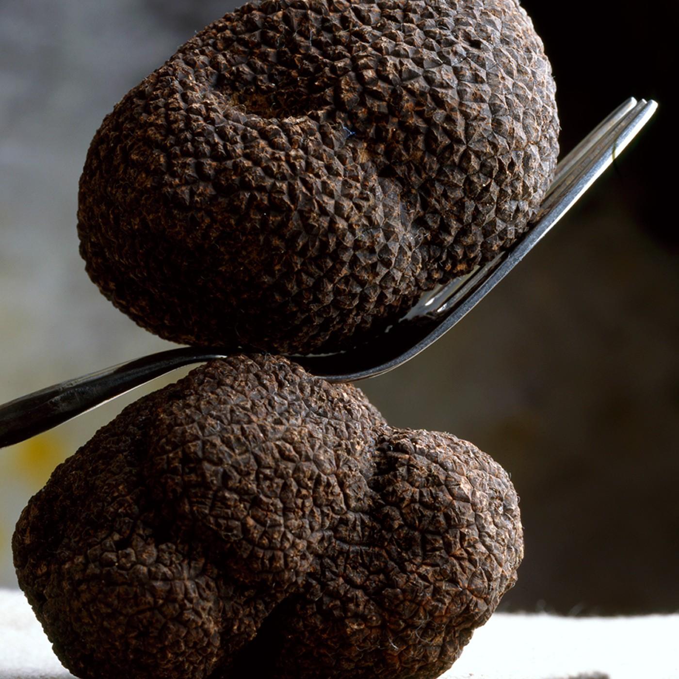 Fresh Burgundy Truffles 4 oz