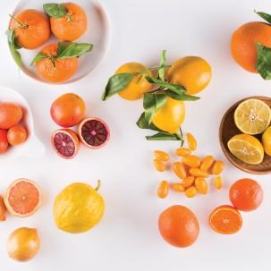 The Citrus Lover